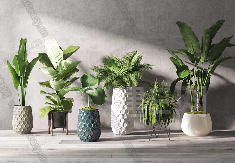 盆栽植物组合3d模型