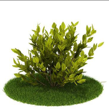 灌木 灌木模型【模型id:3937】