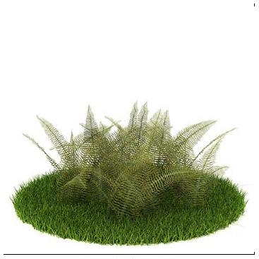 灌木 灌木模型【模型id:3972】