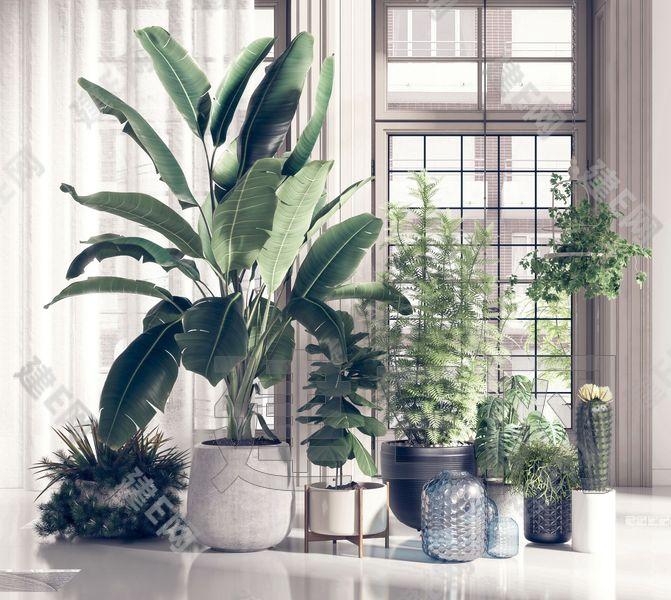 盆景盆栽植物組合3d模型